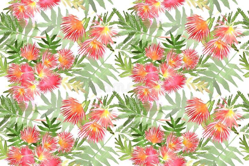 Folha e flores do julibrissin do Albizia da mimosa do teste padrão ilustração do vetor