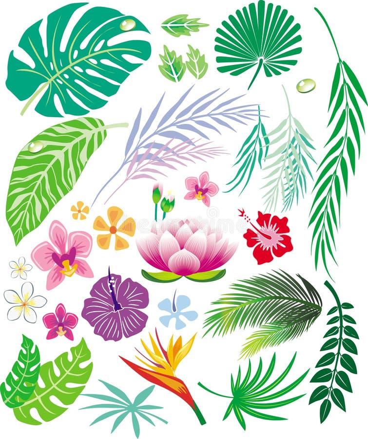 Folha e flores tropicais ilustração royalty free
