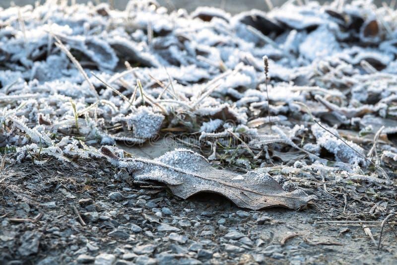 A folha e a grama congeladas congeladas na terra coberta no hoar geiam uma manhã nórdica adiantada fria do inverno no nascer do s imagens de stock