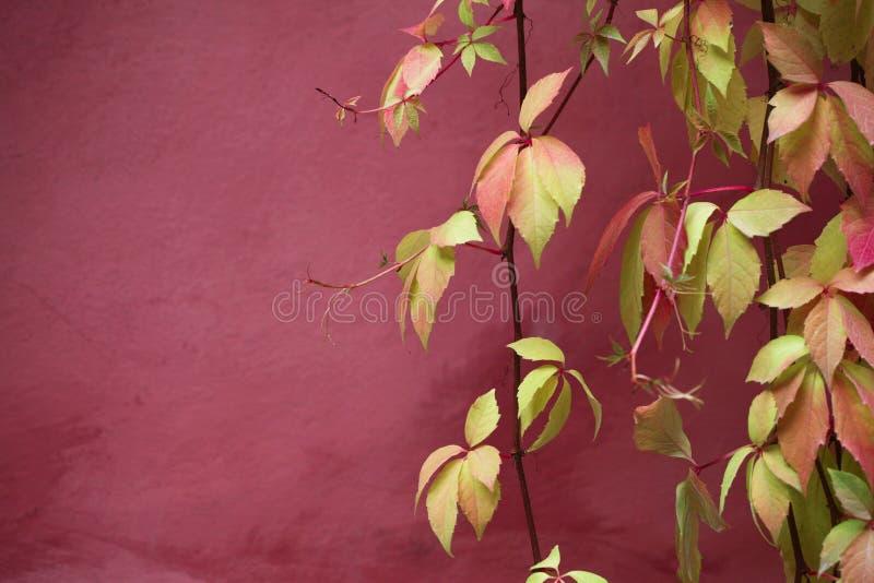 Folha e parede imagem de stock