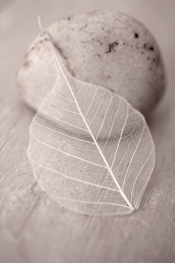 Folha e pedra imagens de stock