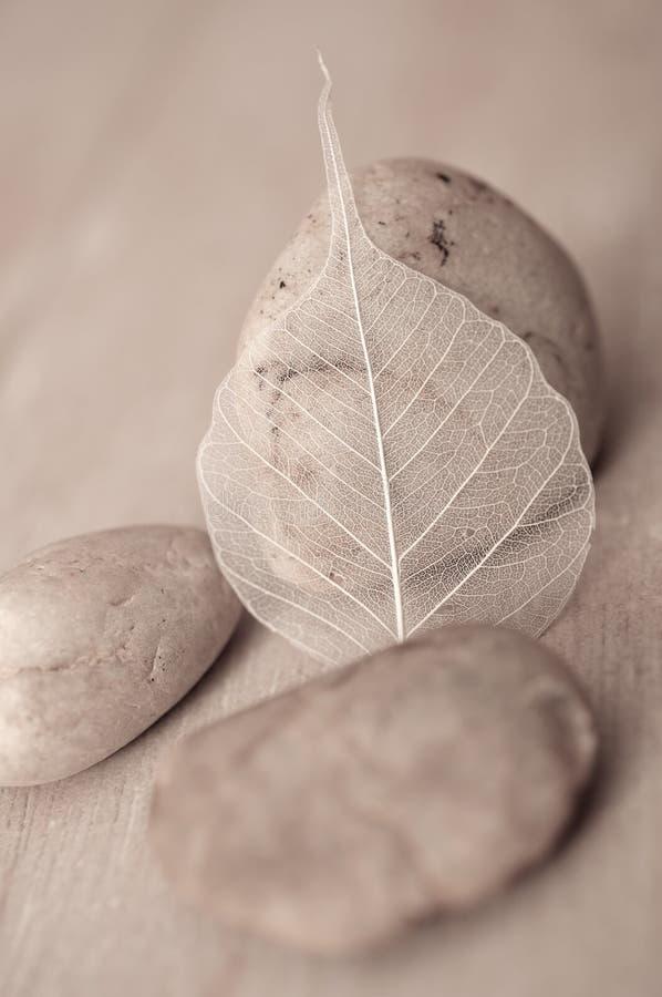 Folha e pedra fotos de stock
