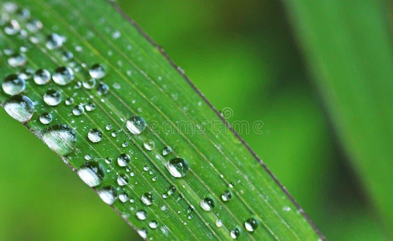 Folha e pingos de chuva foto de stock