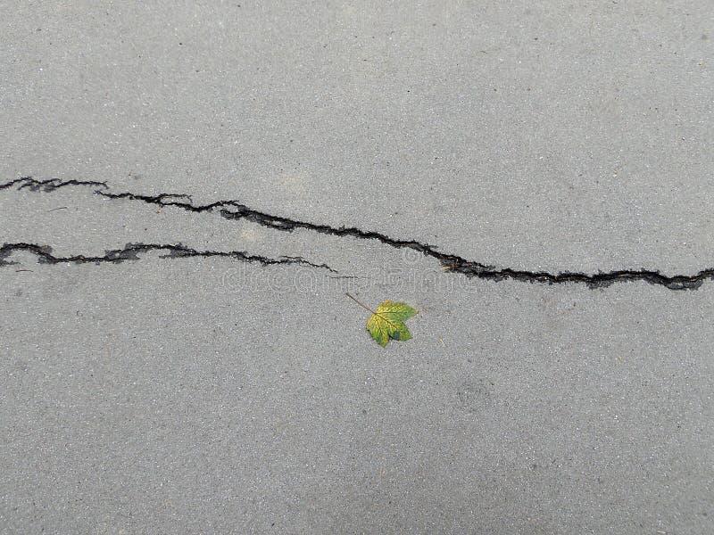 Folha e quebra fotografia de stock