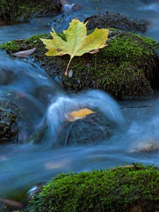 Folha em The Creek 2 imagens de stock royalty free