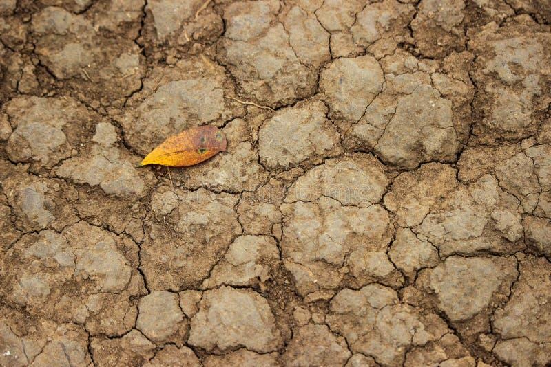 Folha em terra seca rachada foto de stock