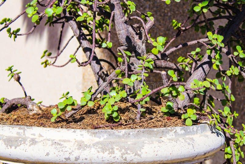 Folha Flora Wood Plants Botany da planta do cacto foto de stock royalty free