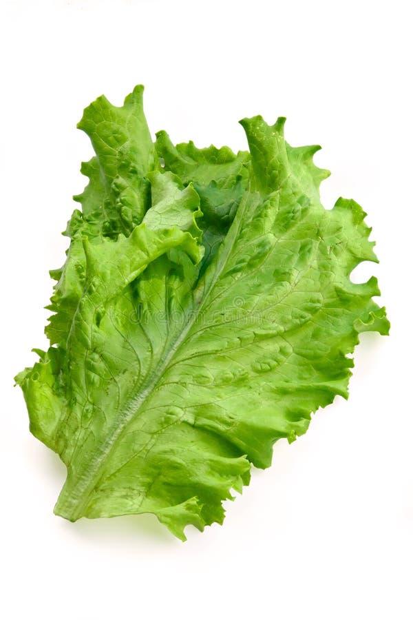 Folha fresca grande verde da salada foto de stock royalty free