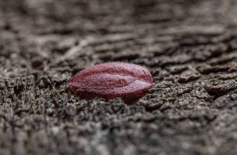Folha inoperante na superfície áspera fotografia de stock