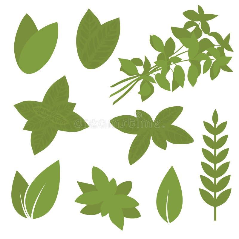 Folha isolada da erva, planta ilustração royalty free