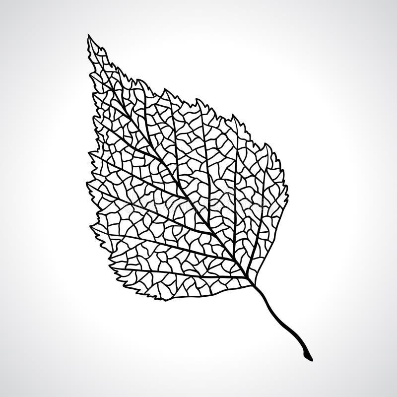 Folha macro preta da árvore de vidoeiro isolada ilustração royalty free