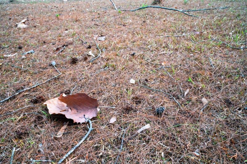 Folha marrom secada caída na terra da grama secada 3 imagens de stock