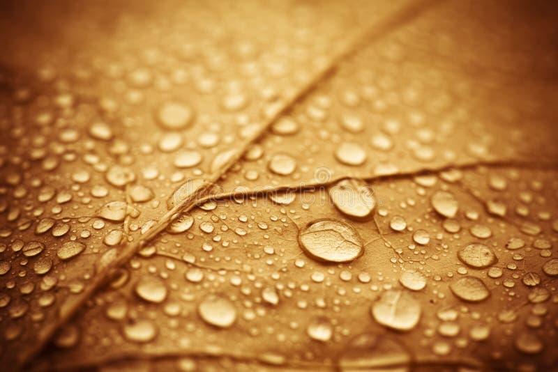 Folha molhada do outono fotografia de stock