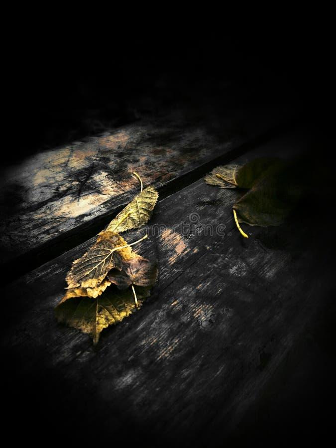 Folha na madeira velha fotografia de stock