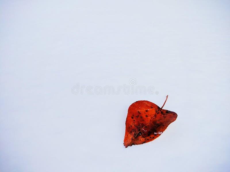 Folha na neve imagem de stock