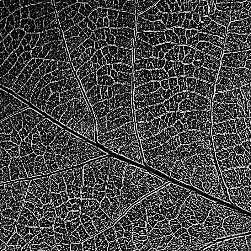Folha natural textura descolorizada com malha listrado imagem de stock royalty free