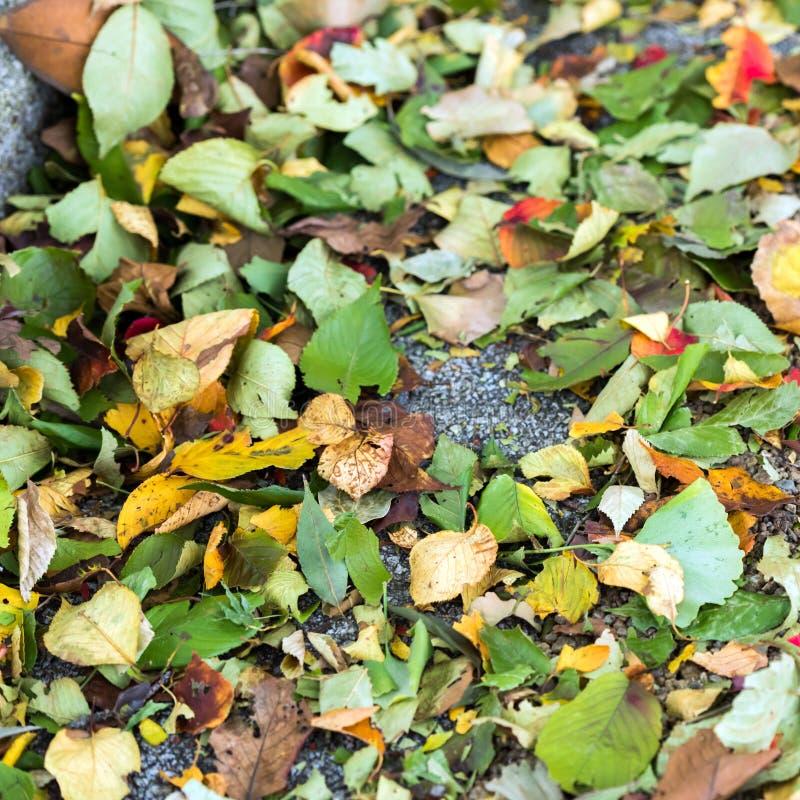 Folha no asfalto no parque da cidade, Tóquio do outono, Japão Close-up foto de stock royalty free
