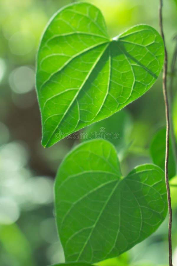 A folha no fundo da natureza foto de stock