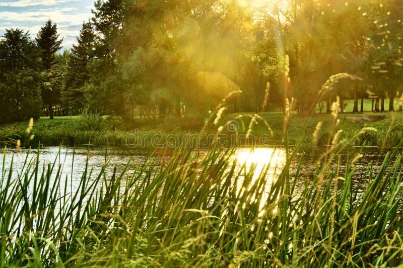 Folha no rio durante o por do sol do outono imagem de stock royalty free