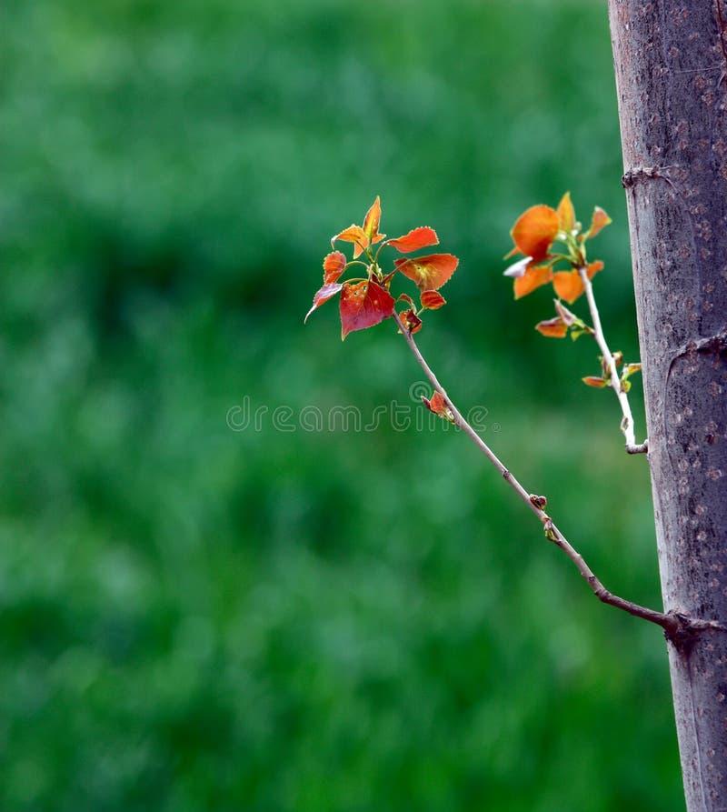 Folha nova das árvores imagem de stock royalty free