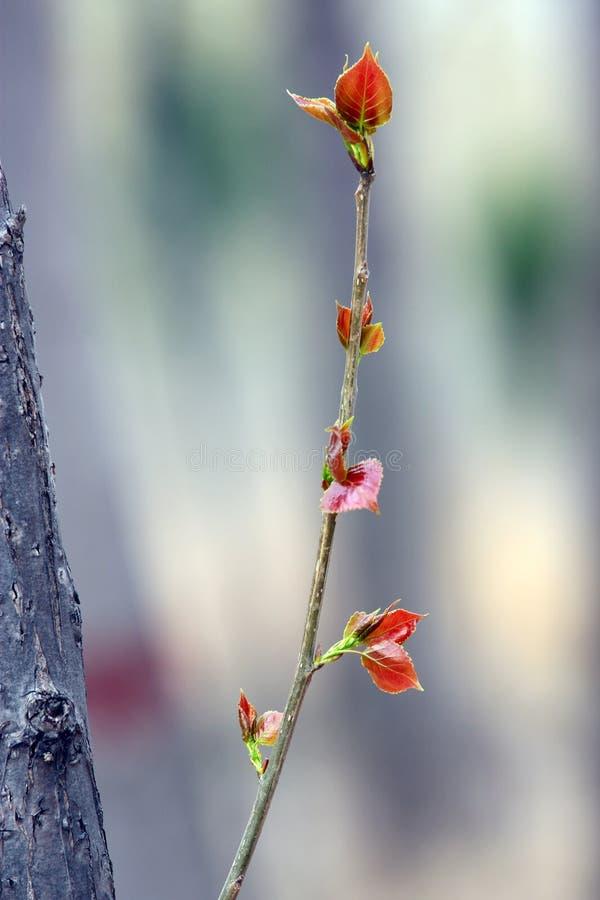 Folha nova das árvores fotografia de stock royalty free
