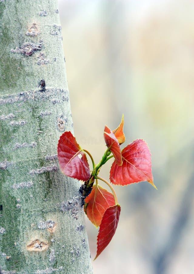Folha nova das árvores foto de stock royalty free