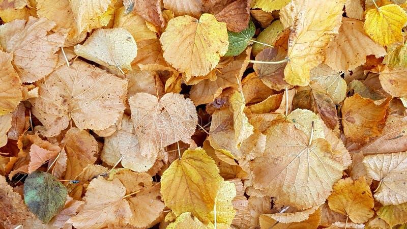 Folha, outono, decíduo