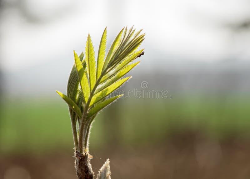 Folha pequena com verde fresco fotografia de stock