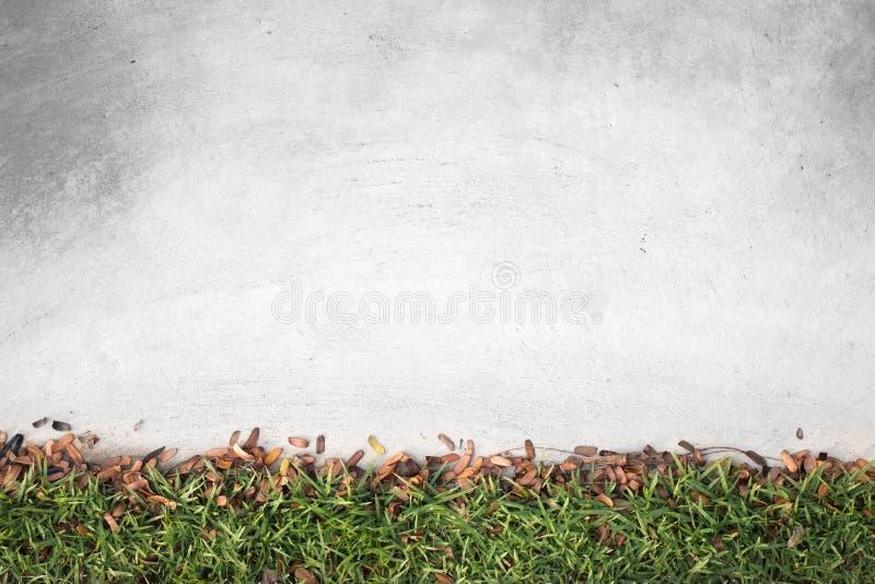 Folha pequena de Brown e grama verde com o assoalho concreto velho no jardim fotografia de stock royalty free
