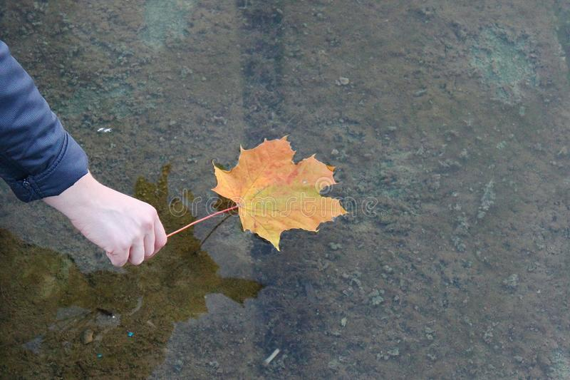 Folha posta na água Sombra na água outono na vinda Folha de plátano isolada folha de bordo na água com mão fotos de stock royalty free