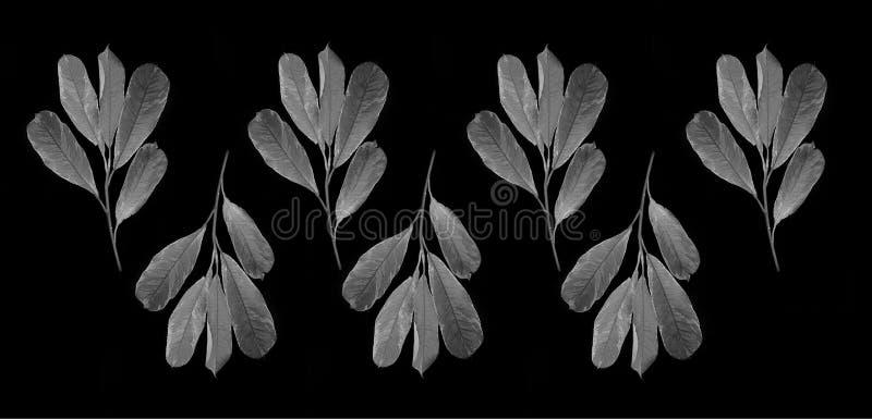 Folha preto e branco foto de stock