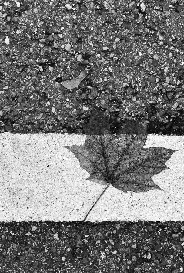 Folha preto e branco no pavimento imagem de stock