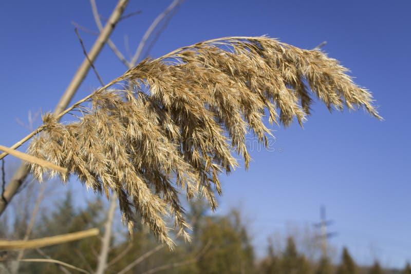 Folha só durante o inverno e céu azul para o fundo imagens de stock