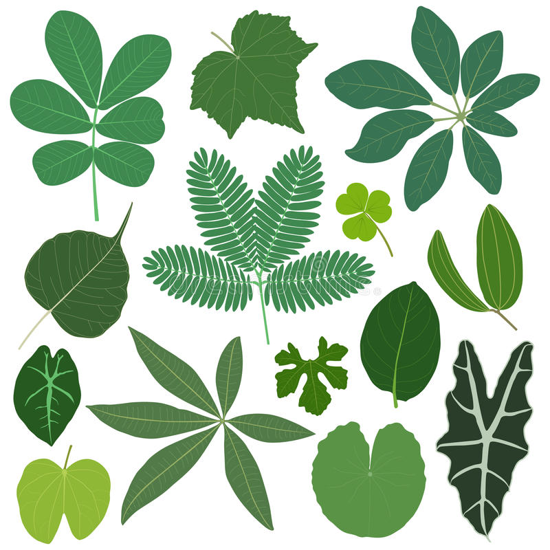 A folha sae da planta tropical