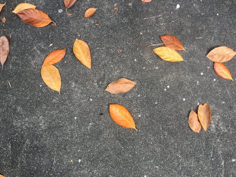 Folha seca imagens de stock