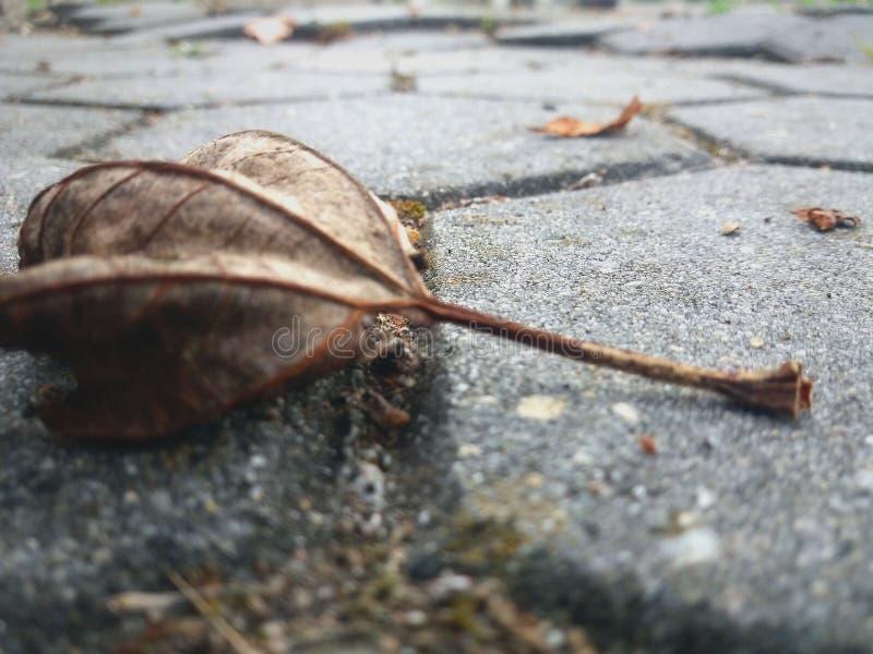 Folha seca bonita e outono caídos imagens de stock royalty free