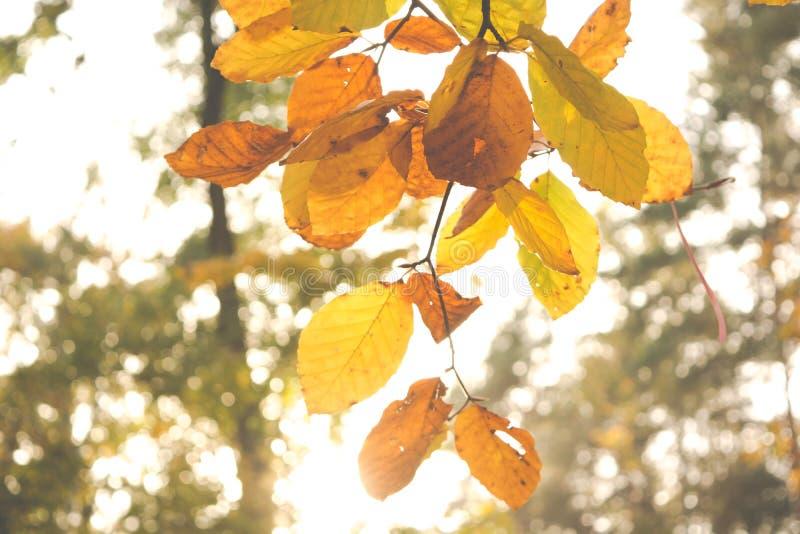 Folha seca castanha em Macro Fotografia Cheia fotos de stock