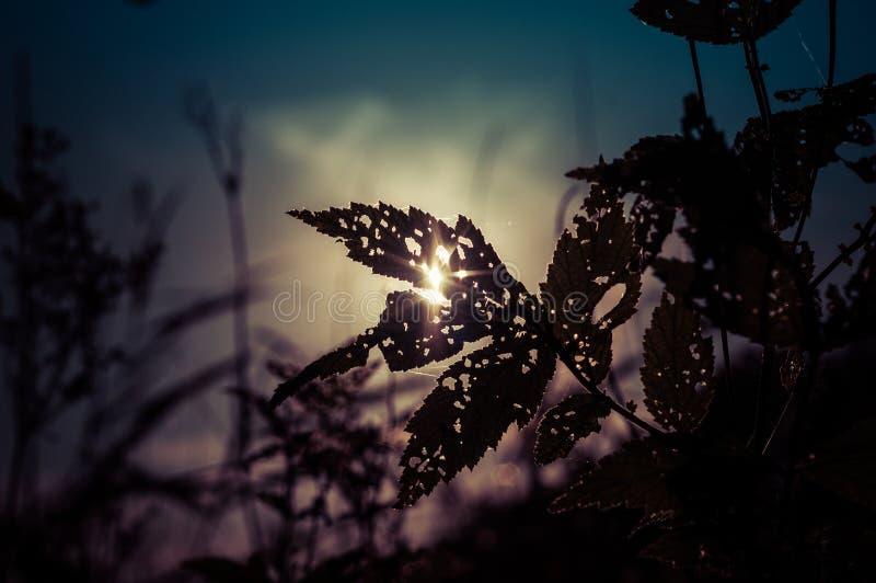 Folha seca da erva sob o sol imagens de stock