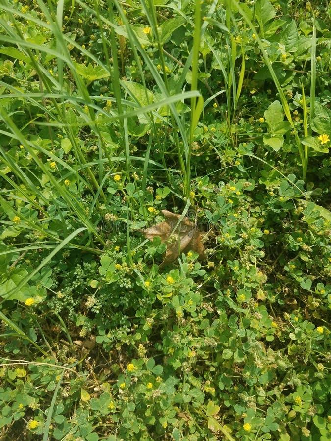 Folha seca do outono no prado verde do verão imagem de stock royalty free