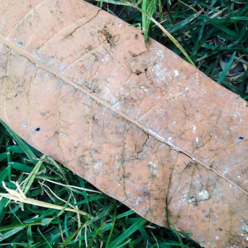 Folha seca na grama verde fotos de stock