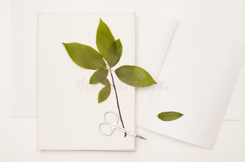 A folha secada da cereja selvagem no livro branco imagem de stock royalty free