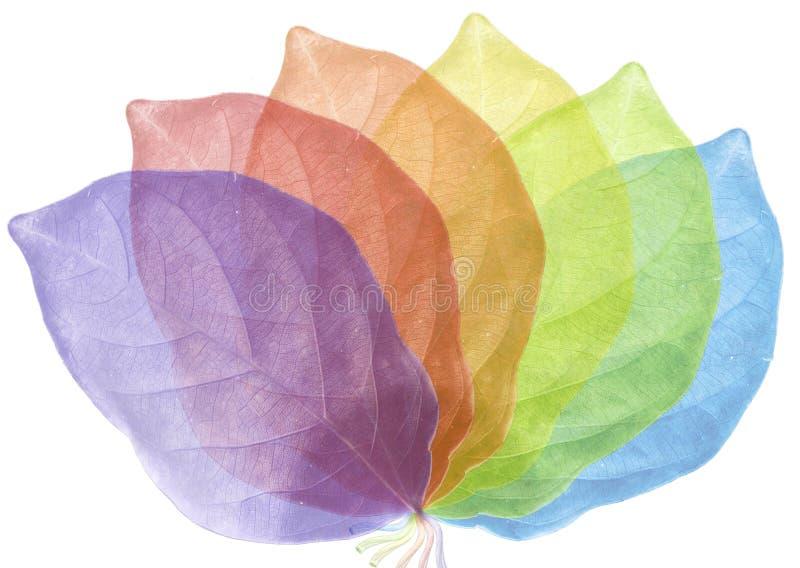 Folha seis colorida arranjada fotos de stock