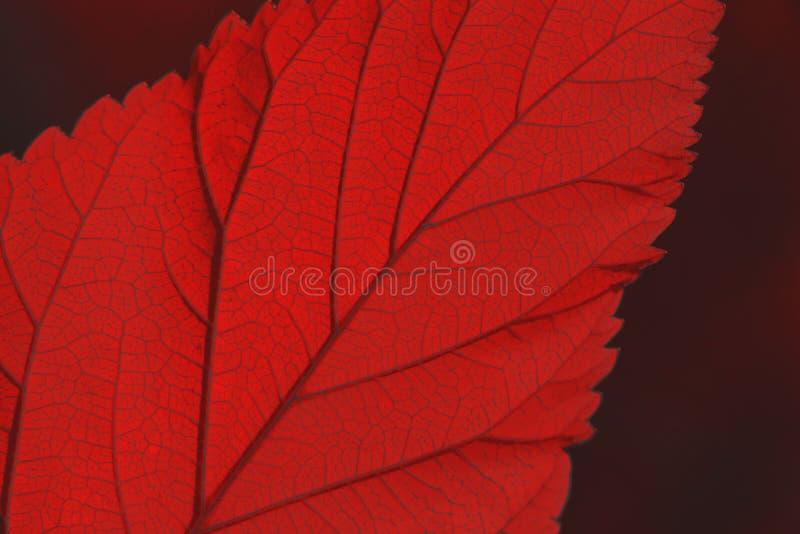Folha textured vibrante na cor do coral de vida fotografia de stock
