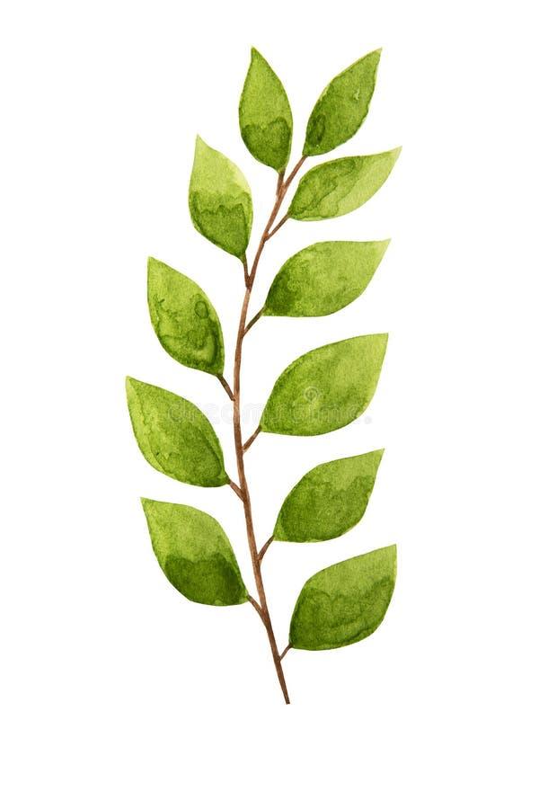 Folha tirada m?o da planta tropical da aquarela Ex?tico, folha do ver?o, folha Elemento do molde de Desing ilustração stock