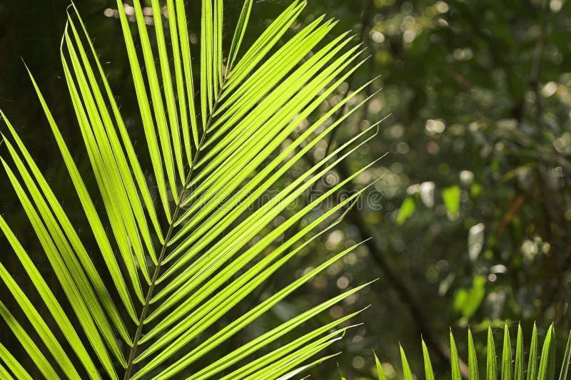 Folha tropical fotografia de stock