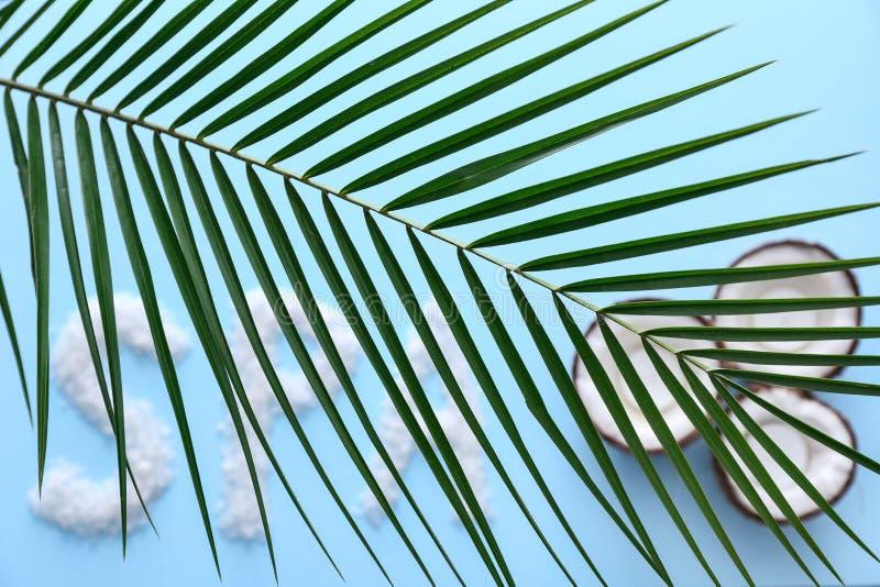 A folha tropical bonita, palavra TERMAS fez do sal e dos cocos do mar no fundo da cor fotos de stock royalty free