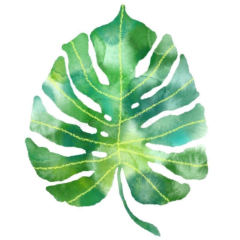 Folha tropical de Monstera da aquarela Ilustração exótica da planta ilustração royalty free