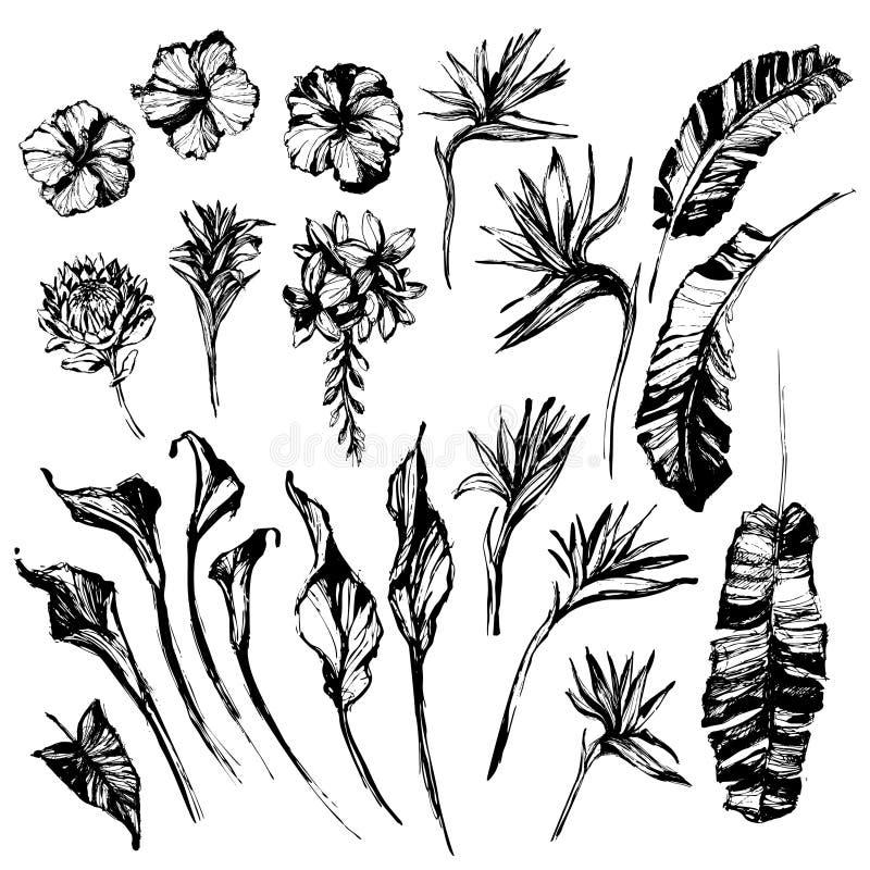 Folha tropical do Grunge, grupo de elementos da silhueta da flor isolado no fundo branco ilustração do vetor
