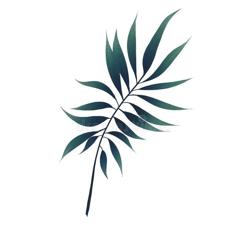Folha tropical grande da palma