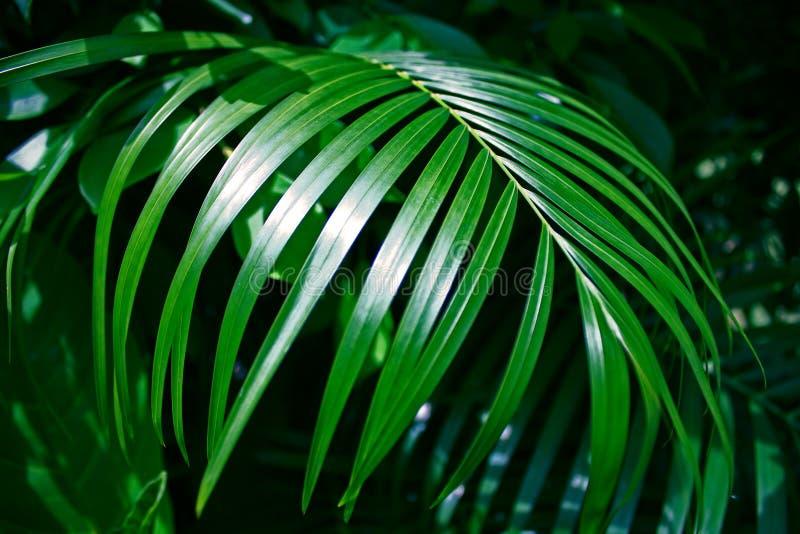 Folha tropical Sunny Green Saturated Background do ramo fotografia de stock